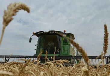 Украина исчерпала годовую квоту на экспорт пшеницы