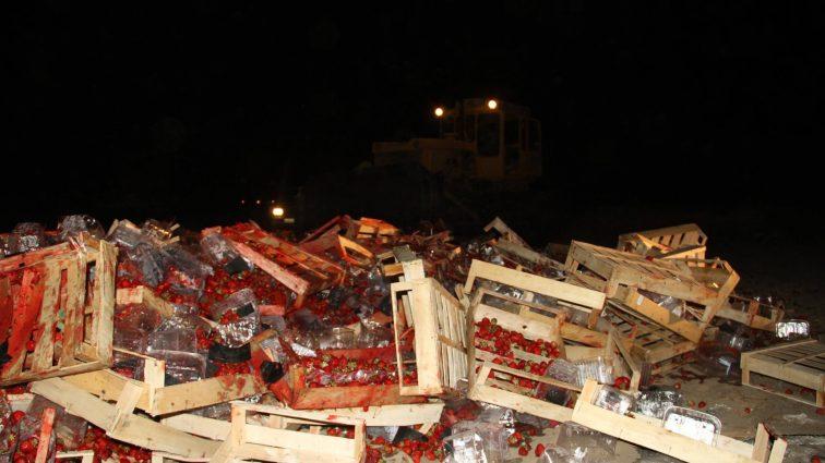 Как в России 40 тонн украинской клубники уничтожили бульдозерами