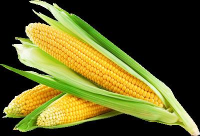 Фермеры массово сдерживают продажи запасов кукурузы