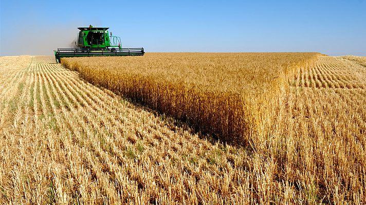 Украине предсказывают большой урожай на экспорт