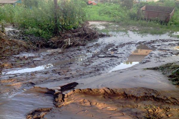 На Тернопольщине стихия уничтожила более 3000 гектаров посевов