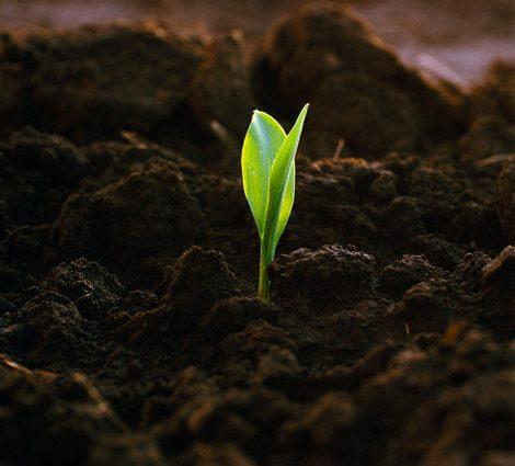 Почем почвы: в Украине грядет земельная реформа