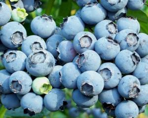 Украинцам обещают удешевление одной из самых дорогих ягод