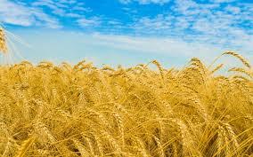 Как украинский агробизнес покоряет мир