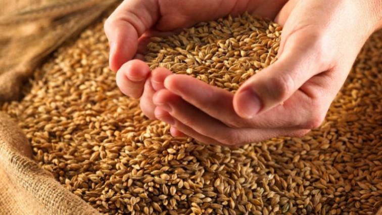 Украина побила рекорд в экспорте зерна