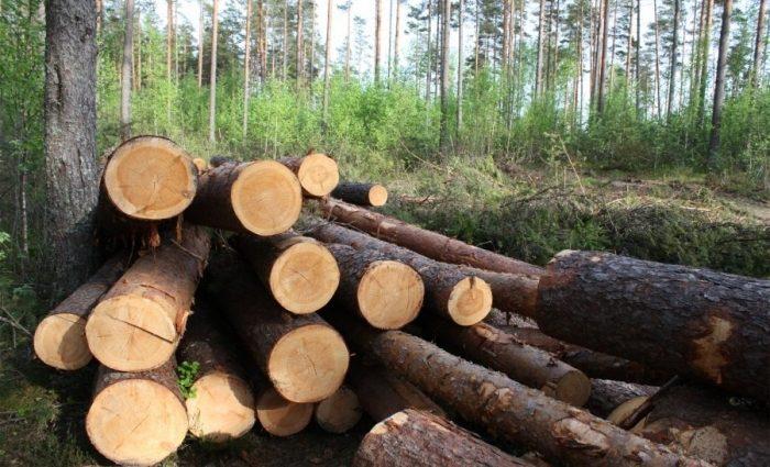 Оборот незаконной вырубки леса в Украине достигает $ 10 миллиардов