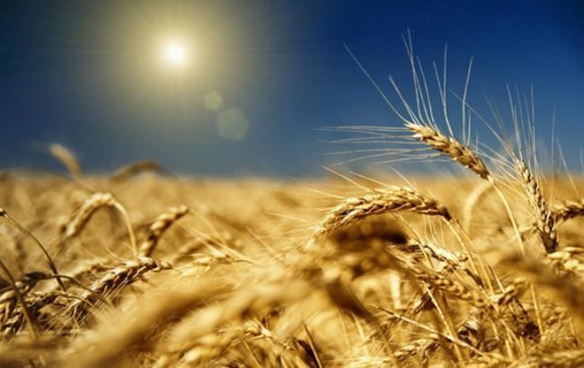 Кабмин ведет сельское хозяйство не в ту сторону