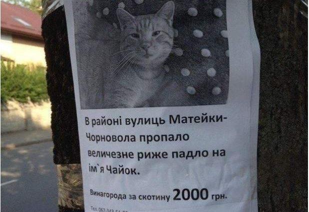 Как в Украине ищут рыжего кота