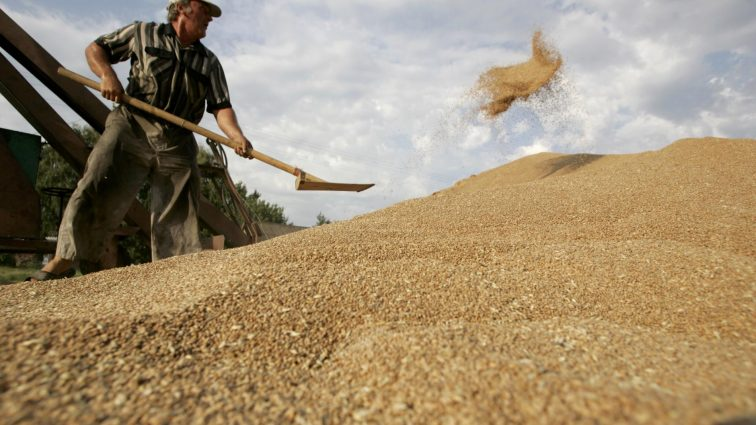 Иностранные покупатели отказываются  от украинского зерна