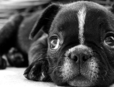 Львовян будут штрафовать за незарегистрированных собак: подробности стоимости регистрации
