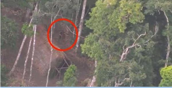 Пролетая над джунглями, они увидели ЭТО. Поверить не могу, что такое возможно!