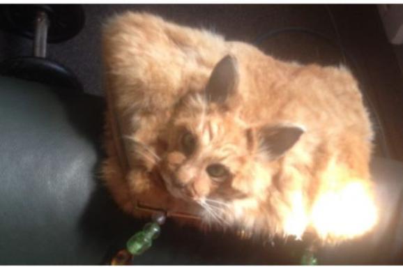 На аукционе в Новой Зеландии продали сумку из кота
