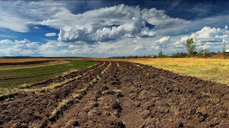 Иностранный советник Кабмина рассказал, что ждет Украину после открытия рынка земли