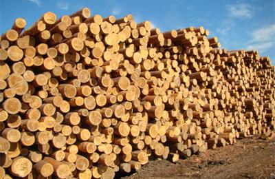 С 1 января из Украины запрещено вывозить лес