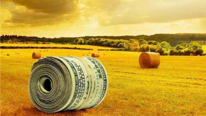 Почему украинская пшеница так стремительно дорожает? Обьяснения эксперта