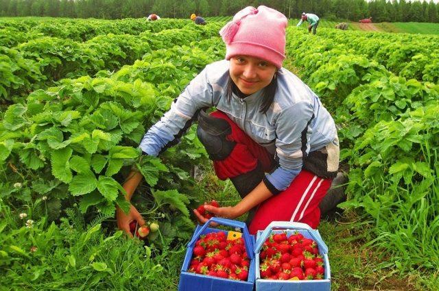 «И это в наше время?»: польские работодатели незаконно используют труд украинских наемников!