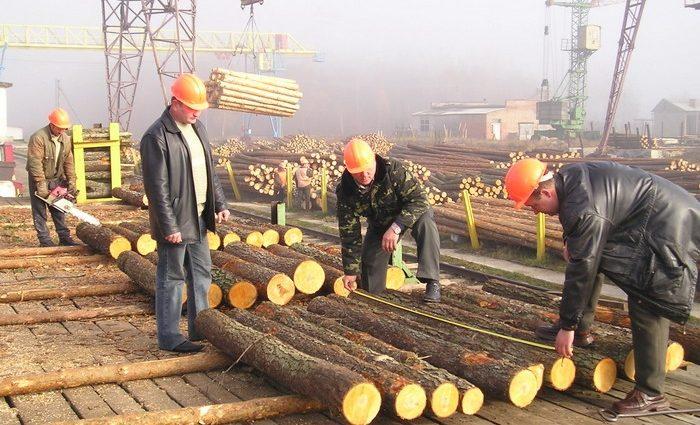 Реформа лесного хозяйства: как ЕС поддержит Украину