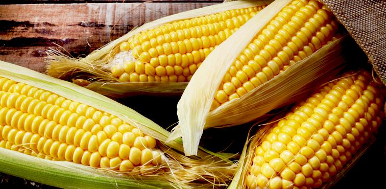 Еще один торговый партнер: Кения будет покупать украинскую кукурузу