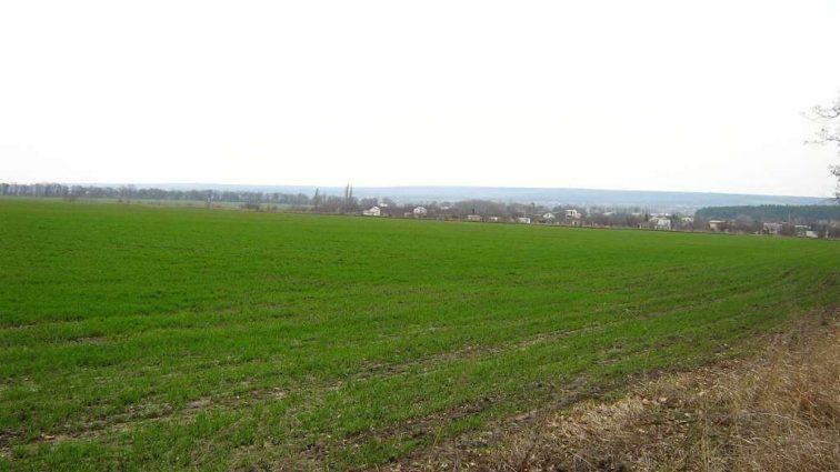 Запорожская область: большинство площадей озимых в хорошем состоянии