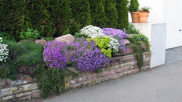 Как оформить садовый участок или дачу живой изгородью и как за ней потом ухаживать