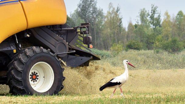 Недосев, погода и низкая рентабельность: чего Украине ждать от нового урожая