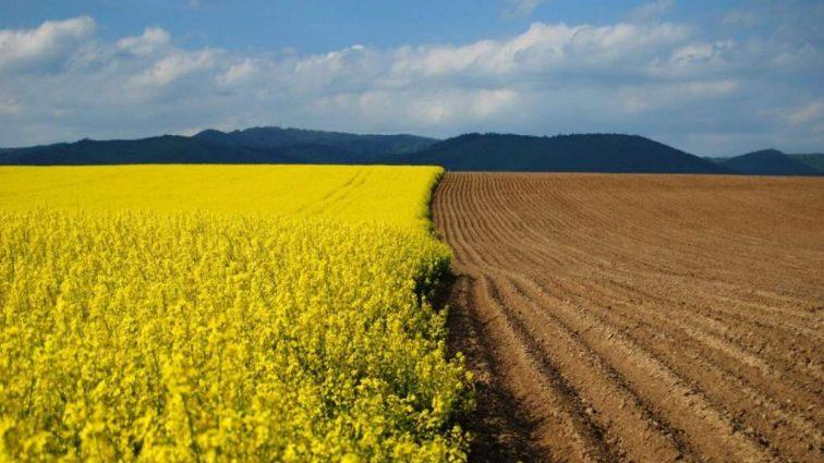 Мораторий на продажу земли : Как украинцы обходят закон.