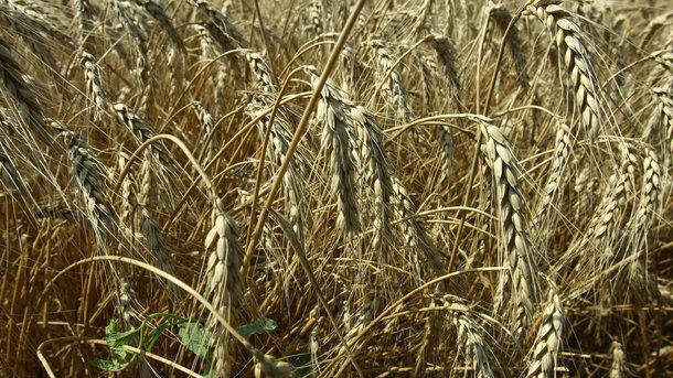 Весенние заморозки ударят по урожаю в Украине – эксперт