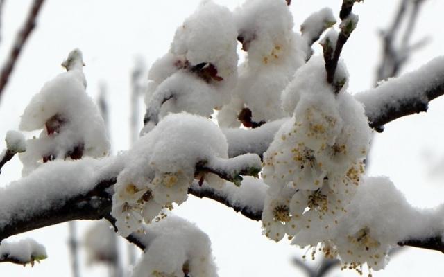 Потеря урожая из-за заморозков: как изменятся цены на рынках