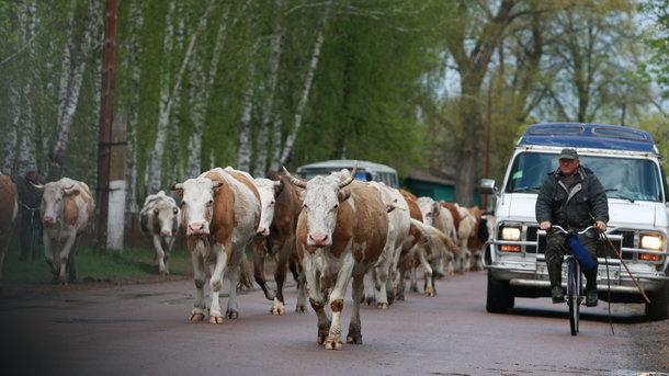 Украина отказывается от говядины и переходит на дешевую птицу