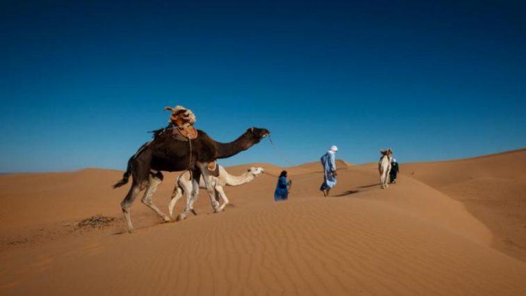 Глобальное потепление кардинально изменит вид Сахары