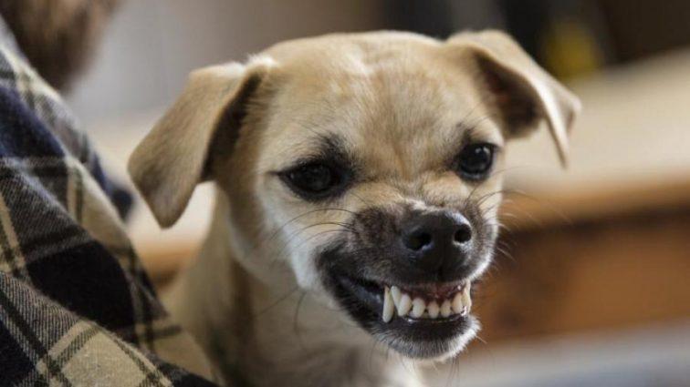 Ученые обнаружили у собак странный синдром