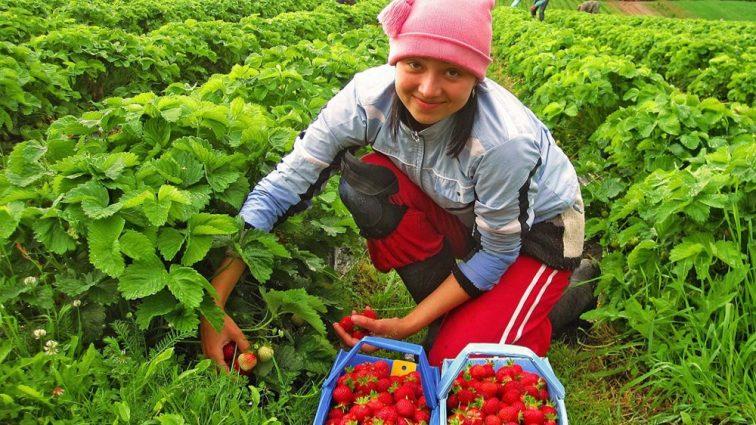 Как безвизовых изменил зарплаты украинских работников: озвучено ставки