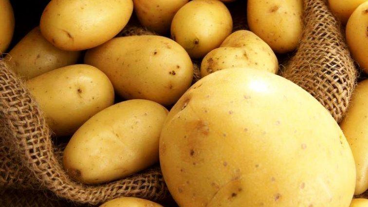 Беларусь скупила в Украине всю экспортную картофель