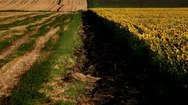 Балога объяснил, почему власть испугалась земельной реформы