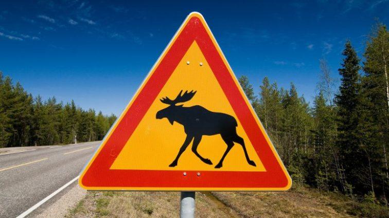 По Европе на авто: что нужно для поездки и знаки могут встретиться на пути