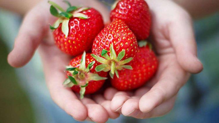Витаминный бум: трехдневная диета поможет сбросить лишнее