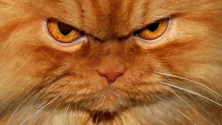 Ученые раскрыли секрет злых котов