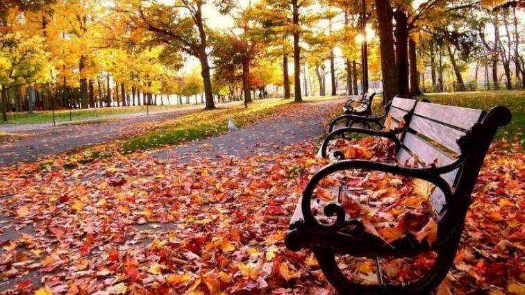 Погода осенью: когда ждать первых заморозков
