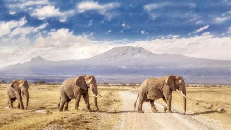 Ученые подсчитали, сколько растений «садят» слоны