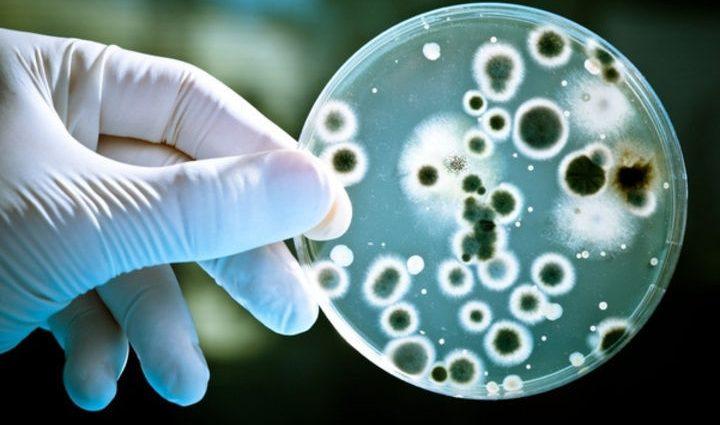 В Ватикане состоится семинар о клеточной биологии