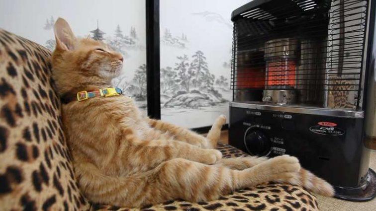 Отопительный сезон в Украине: выберите обогреватель, чтобы точно не мерзнуть