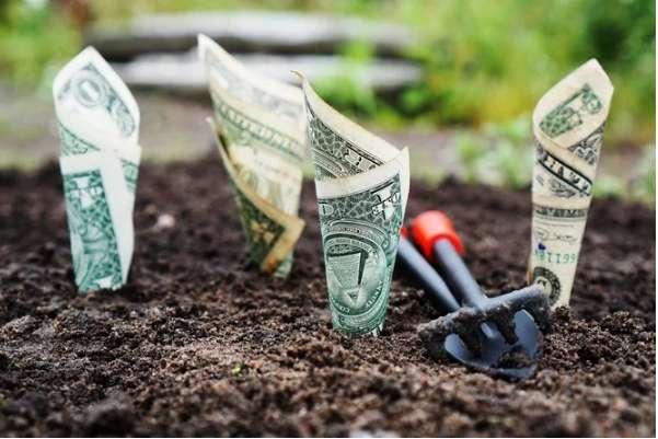 Долларовый дождь в Виннице: решена судьба усеянной деньгами клумбы
