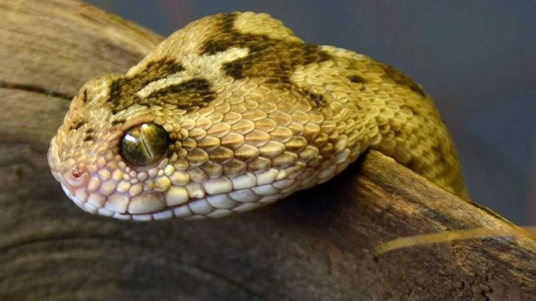 Противоядие от змеиных укусов шокировало биологов
