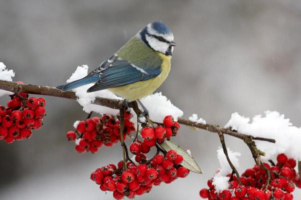 Синоптики сообщили, какой погоды ждать от первого месяца зимы