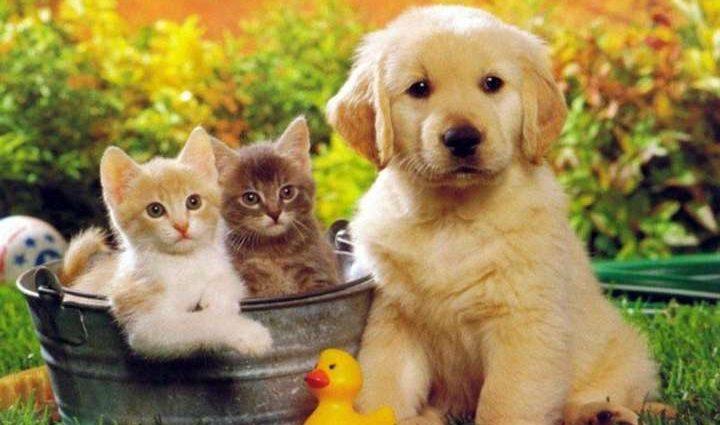 Домашних животных не смогут похоронить: утилизировать с отходами