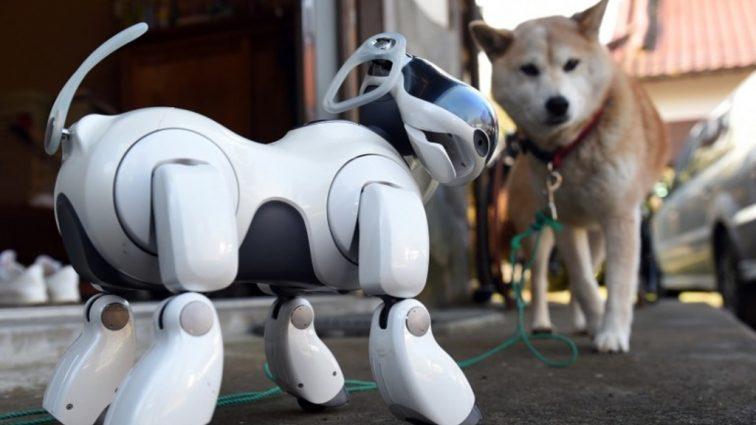 Новая версия робота-пса Aibo скоро появится в магазинах