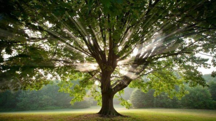 Экологи рассказали, когда технологии заменят деревья