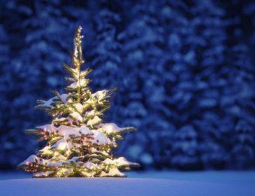 Оставьте дерево в лесу: 10 вариантов оригинальных новогодних елок