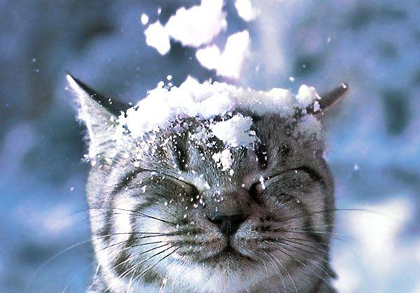 Кому завтра ждать весну, а кому — готовить лопаты для снега: прогноз погоды на 4 декабря