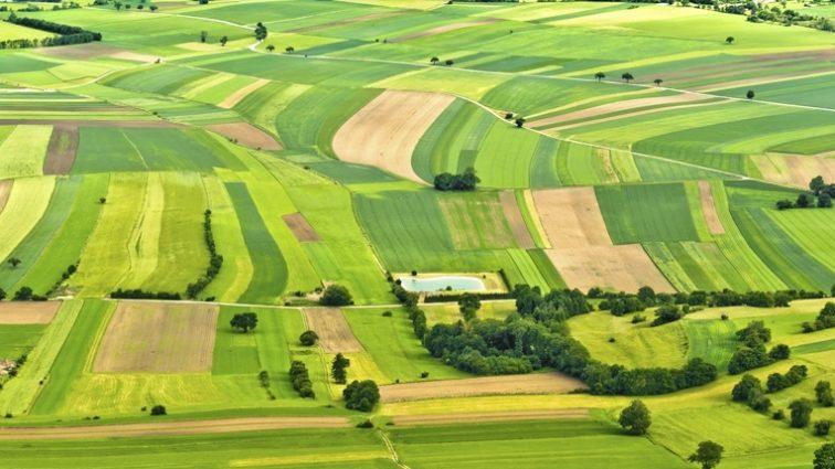 В Украине хотят продлить запрет на продажу сельхозземель